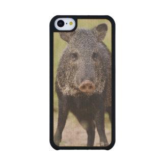 Collared Peccary Pecari tajacu) adults, Santa Carved® Maple iPhone 5C Case
