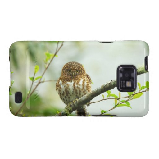 Collared pigmy owlet perching on tree branch, galaxy s2 covers