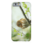 Collared pigmy owlet perching on tree branch, barely there iPhone 6 case
