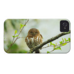 Collared pigmy owlet perching on tree branch, iPhone 4 case