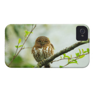 Collared pigmy owlet perching on tree branch, iPhone 4 cover