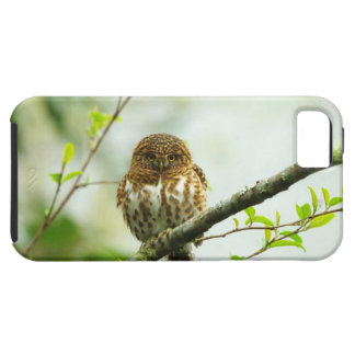 Collared pigmy owlet perching on tree branch, iPhone SE/5/5s case