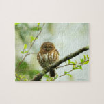 Collared pigmy owlet perching on tree branch, jigsaw puzzle