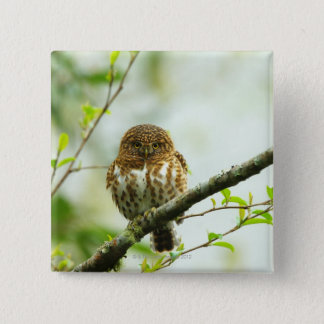 Collared pigmy owlet perching on tree branch, pinback button