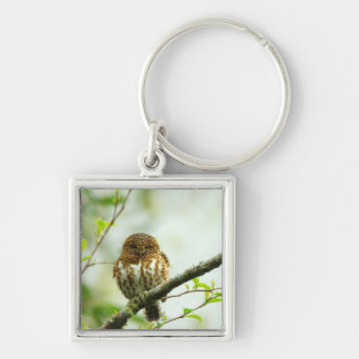 Collared pigmy owlet perching on tree branch, Silver-Colored square keychain