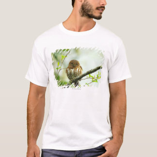 Collared pigmy owlet perching on tree branch, T-Shirt