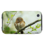 Collared pigmy owlet perching on tree branch, tough iPhone 3 cover