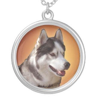 Collares fornidos del Malamute del husky siberiano