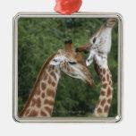 Collarino de dos jirafas (camelopardalis del Giraf Ornamento De Reyes Magos