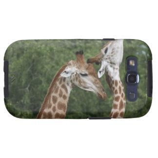 Collarino de dos jirafas (camelopardalis del Giraf Galaxy S3 Fundas