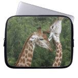 Collarino de dos jirafas (camelopardalis del Giraf Mangas Computadora