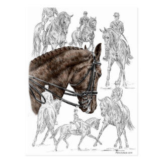 Collected Dressage Horses FEI Postcard