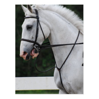 Collected White Horse  Postcard
