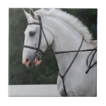 Collected White Horse Tile