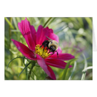 Collecting Pollen Card
