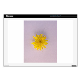 """Collection daisies by Babylandia 17"""" Laptop Decals"""
