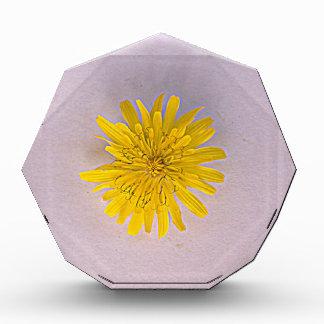 Collection daisies by Babylandia Award