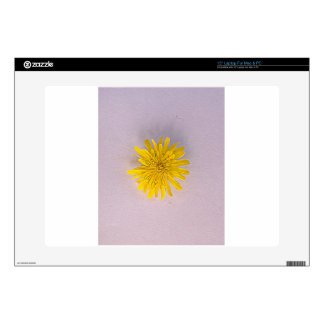 Collection daisies by Babylandia Decal For Laptop