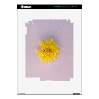 Collection daisies by Babylandia iPad 3 Decals