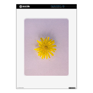 Collection daisies by Babylandia iPad Decal