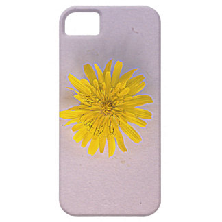 Collection daisies by Babylandia iPhone SE/5/5s Case