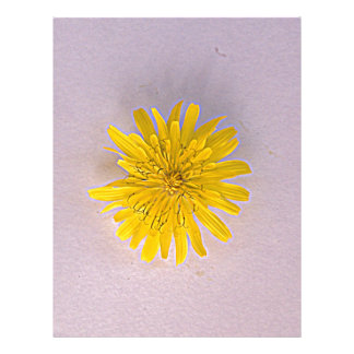 Collection daisies by Babylandia Letterhead