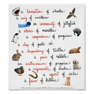Collective Nouns: posters