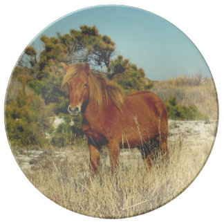 Collector plate for the horse lover