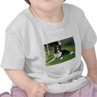 collie 059border camiseta
