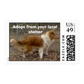 Collie 2 Postage