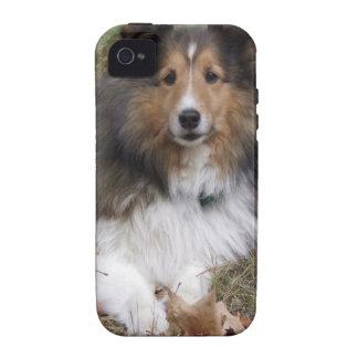 collie-6 Case-Mate iPhone 4 cases