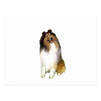Collie (A) - Sable and white Postcard