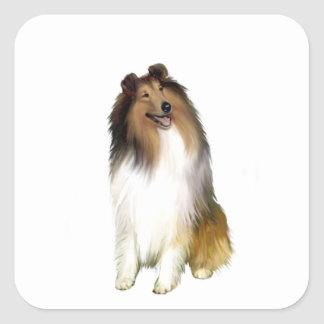 Collie (A) - Sable and white Square Sticker