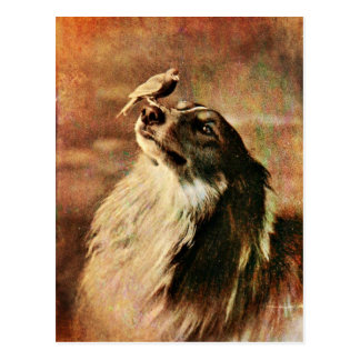 Collie and Birdie Postcard