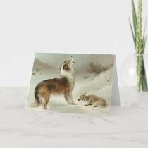Collie and sheep card