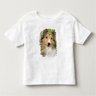 Collie áspero, perro, animal playera de bebé