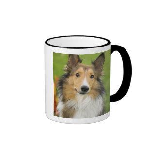 Collie áspero, perro, animal taza