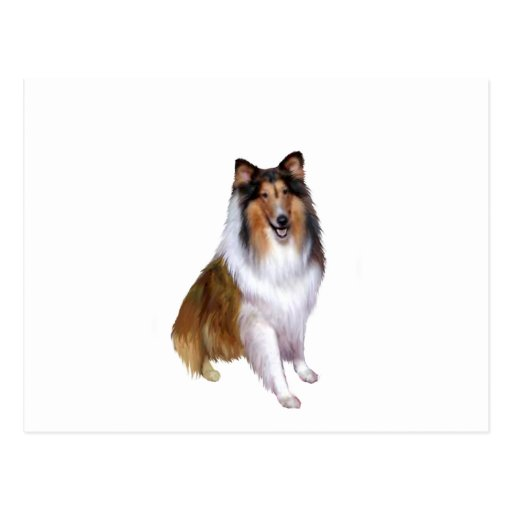 Collie (B) - Sable and white #2 Post Card
