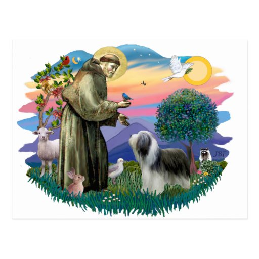 Collie barbudo (pizarra-blanco) tarjetas postales