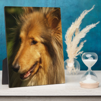 Collie Breed Plaque