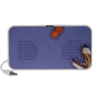 Collie catching plastic bone travel speakers
