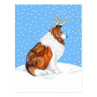 Collie Christmas Reindeer Sable Postcard