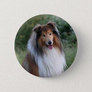 Collie dog beautiful photo button, pin