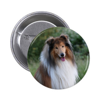 Collie dog beautiful photo button, pin