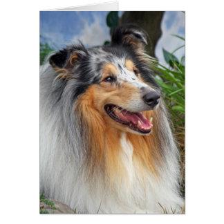 Collie dog blue merle blank greeting card
