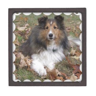 Collie Dog Box  Premium Trinket Box