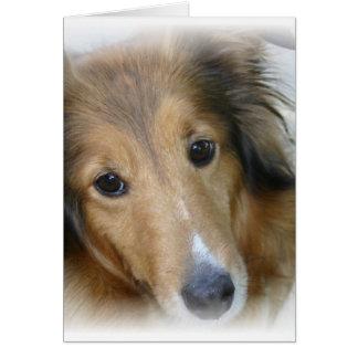 Collie Dog Greeting Card