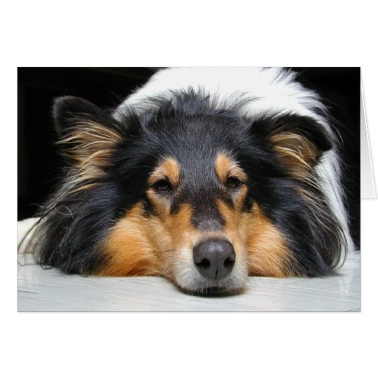 Collie dog nose tri color blank greeting card