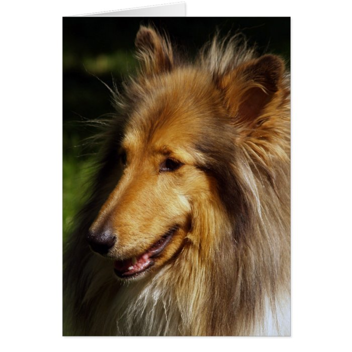 Collie Dog Photograph Card