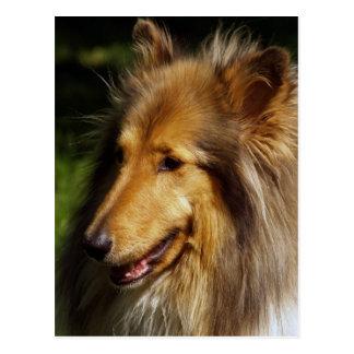 Collie Dog Photograph Postcard